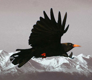 Choughmountain Design